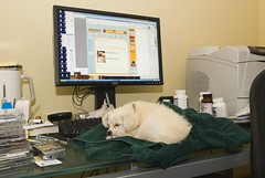 Day 4: Truffle sleeping on the job again (and browsing dogster.com)!