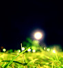 A Grasshopper's Sight (^riza^) Tags: grass indonesia lights football fifaworldcup2006 indonesianphotobloggers