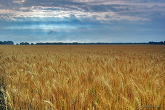 Shined Wheat Field (Dietrich Bojko Photographie) Tags: field d50 germany landscape bravo searchthebest webinteger quality wheat nikond50 sunrays brandenburg circularpolarizer altlandsberg 18mm cokinp121 nikkor1855mm cokinp164 3000v120f gnd8