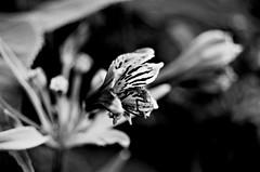 (zachtatum) Tags: deleteme5 deleteme8 blackandwhite bw white black flower deleteme deleteme2 deleteme3 deleteme4 deleteme6 deleteme9 deleteme7 spring saveme saveme2 deleteme10 anther