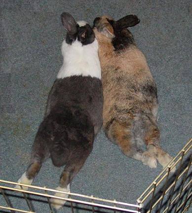 Our 2 Bunlovers