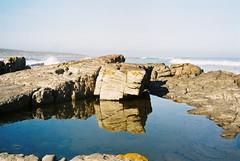 f1000008.jpg (nic777) Tags: ocean birds sealife sean scarborough tidal tidalpools clubouting