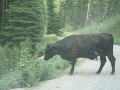 IMG_2185 (wiseleyb) Tags: roadtrip2006
