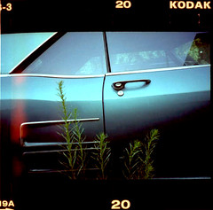 staple (puja) Tags: seattle film topf25 car xpro crossprocess slidefilm xa2 olympusxa2 capitolhill sprockets epsonperfection3170 tenpositive theparkedcar