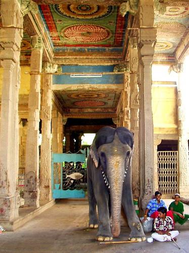 Elephant in Temple by Kamala L