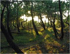 mi bosque encantado (Kabhir) Tags: souls downs point lost power time cruising meeting ups confusion boussole deboussol