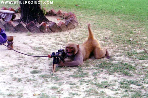 pictures of monkeys with guns. monkeys with guns