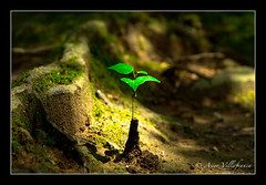 Nature's birth (Asier Villafranca) Tags: plant tree green nature japan contrast dof sony interestingness1 nara japon 3ofakind 1111v11f sonydscr1 lmff lmff1 lmff2 lmff3 judgmentday56 cm089