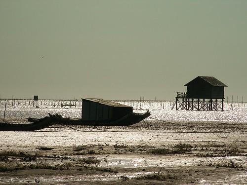泥質灘地餵養著許多生物。圖片提供:彰化環境保護聯盟