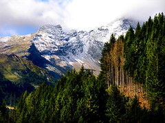 My favourite light (angelocesare) Tags: trees sky italy snow mountains alps topf25 lights italia explore alpi montagna valchiavenna flickrexplore inflickrexplore cotcbestof2006 onflickrexplore angeloamboldiphotos