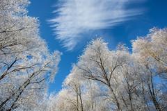 The beauty of winter (++sepp++) Tags: bayern deutschland landscape landschaft landschaftsfotografie lechfeld wetter winter sonnig sunny raureif germany heiter bavaria bäume trees hoarfrost