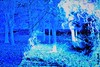 ,,I used to be Snow White, but I drifted. '' (C.DeR) Tags: multipleexposure blue snow forest abstract texture cder glowing lights tree white light winter silhouette whiteandblue outdoor trees whitesnow new nature