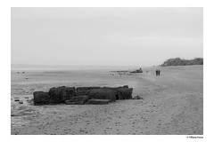 (Tiffanie Poiret) Tags: canoneos60d playa plage mer sea black white bird dead war