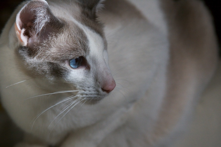 430383663 42616eb2fc o blue eye