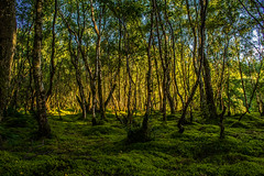 DSC_6189 (Stuart Lilley Photography) Tags: wood forest landscape scotland landscapes woods unitedkingdom forests delgaty