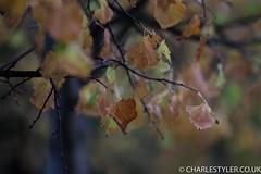 Flickr-9067.JPG
