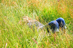 Making Hay while the Sun lasts (Psychic Insights) Tags: flowers summer country jeans hay sunbathing sleepng lazying springgrasses