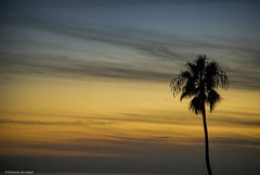 Single (Joe Hengel) Tags: ocean california ca sunset tree clouds pacificocean socal palmtree southerncalifornia orangecounty oc sanclemente theoc sanclementepier