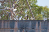 Watering hole (Sun Spiral) Tags: bird australia outback watertank tablelands barkly corellas cattlestation