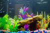 Aquarium-6 (sleepr56) Tags: pet fish bus water vw lost aquarium neon vampire fresh sword phish tetra freshwater neontetra platti platty fishofflickr vampiresword