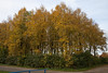 Floriade_251015_6 (Bellcaunion) Tags: park autumn fall nature zoetermeer rokkeveen florapark