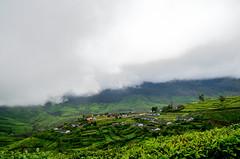 Munnar (Prashob adithiruthy) Tags: morning green nature nikon ngc kerala teagarden munnar greenish nikon5100 topstation kundala devikulam nikon1855 keralatourism nikond5100 teaplanatation