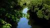 DSCN0706 Mangrove Green Tunnel (tsuping.liu) Tags: outdoor organicpatttern landscape lighting atream nationalpark nature natureselegantshots naturesfinest tree ecotour plant photoborder perspective pattern water