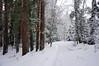DSC02243_2 (aleksey1971) Tags: siberia altai belokurikha winter nature forest landscape tree snow сибирь алтай белокуриха зима природа пейзаж лес снег