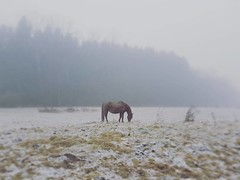 Frozen (Ben Heine) Tags: benheinephotography horse cheval photographie nature winter hiver