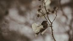 Winter_04 (losing.today) Tags: nature oregon outdoors pacificnorthwest portland pdx portlandor portlandoregon cold coldseason winter