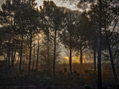 Misty Sunrise (MrBlueSky*) Tags: sunrise mist trees alentejo portugal landscape outdoor forest travel canon canonpowershot