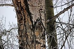 Tree trunk (Jessie T*) Tags: winter mcarthurisland branches knothole bark tree