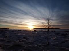 Sunbathing by myself (Jarno Nurminen) Tags: snow ice winter finland helsinki lauttasaari nd500 longexposure shoreline seascape tree clouds morning sunrise