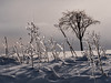 A Canadian (ice) garden (marianna_a.) Tags: p3130338 ice wedds weeds plants landscape winter white weather tree treemendous canada mariannaarmata