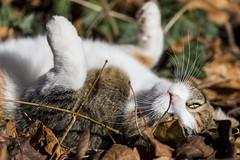 Pallina 1422 (Federico Basile FB Photo Images) Tags: gatto gatta gattina gattino gattini animale felino pallina cucciolo cucciola azione verde neve salto coccole fusa giochi cat smallcat cats cute sweet sweetcat