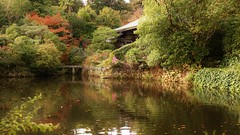 Little Stone Bridge (maco-nonch★R(on/off)) Tags: kyoto 京都 pond calm peaceful lovely afternoon ryoanji 龍安寺
