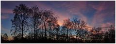 Tree Silhouette. (vegetus aer) Tags: woodwaltonfen greatfen greatfenproject wildlifetrust bcnwildlifetrust nnr cambridgeshire wildlife rx10m3 landscape panorama sunset
