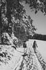 Winter Stroll (mripp) Tags: bavaria bayern germany deutschland europa europe winter snow schnee oberpfalz drackenstein spazieren gehen walk walking black white mono monochrom art kunst dog gassi