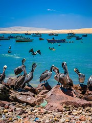 Paracas-140 (m.lencioni3) Tags: paracas peru perù quad ocean pacific pacifico oceano pellicano birds southamerica sony sonya7 fe35mmf28zazeisssonnart fe55mmf18zazeisssonnart konicaminolta1735mmf2845 tour travel trip gringotrail
