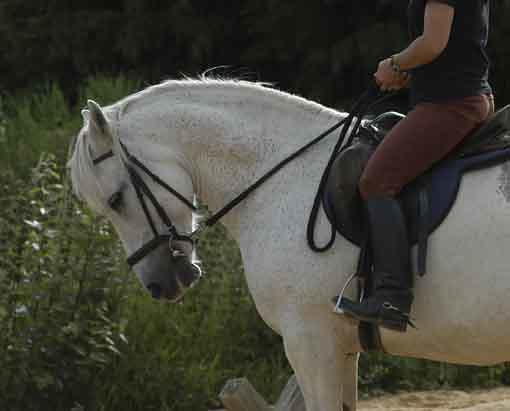 Rollkur pferd