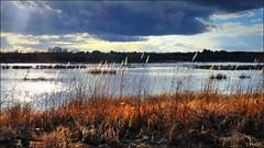 Ominous Sky (Suzanham) Tags: sky clouds sun rays light reeds grass waterscape landscape mississippi lake wetlands sunrays noxubeewildliferefuge sunset canonpowershotsx60hs shadows dark cloudy