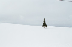 Christmas tree @北海道 美瑛 Fujifilm pro400H / Canon eos5 (winniechiu2016) Tags: film fuijifilm eos5 pro400h 美瑛