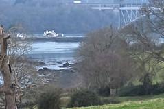 7212 Ynys Gored Goch, an island in the Menai Straits (Andy - Busyyyyyyyyy) Tags: 20170122 bbb bridge britanniabridge iii island menaistraits mmm pontbritannia ppp ynysgoredgoch yyy