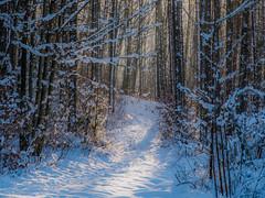 Hidden trail - versteckter Pfad (ralfkai41) Tags: path landscape landschaft woods versteckt outdoor wald natur snow bäume hidden forest trail schnee pfad nature winter
