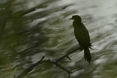 Marshland Musings: My Canvas (Ramesh Adkoli) Tags: landscape birds bharatpur d500 capturenx