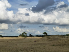 Nationalpark De Hoge Veluwe (guckma) Tags: holland nationalpark explore sparse niederlande naturpark gelderland karg nationalparkdehogeveluwe einsonce kw37297