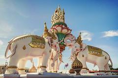 Pink Elephants (Franz - Jimenez) Tags: summer asian thailand gold bangkok culture southeast