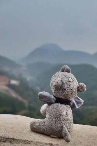 Ringo enjoying a mountainous view