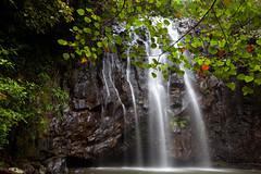 Ellinjaa Falls (Alan McIntosh Photography) Tags: waterfall rainforest falls tropical cascade tablelands atherton ellinjaa
