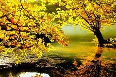mooi (Mysage_BE) Tags: autumn fall herfst